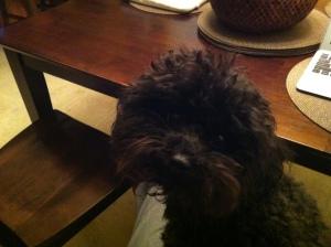 Nala Corey's Dog